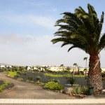 Lazarote's local park — Stock Photo #10141049