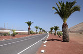 Lazarote's road with palm trees — Stock Photo