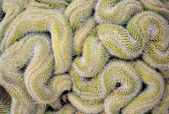 Curled cactus — Stock Photo