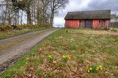 Swedish village in spring season — Stock Photo