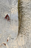 Swedish winter contrasts — Zdjęcie stockowe