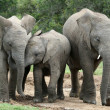 African Elephant Friends — Stock Photo