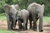 Amigos de elefante africano — Foto de Stock