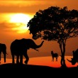 Постер, плакат: African Wildlife Sunset Scene