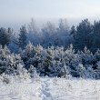 Winter day in Siberia — Stock Photo
