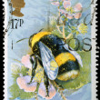 Insect Postage Stamp — Stock Photo