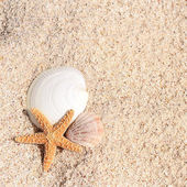 Blank paper beach sand starfish shells summer — Stockfoto