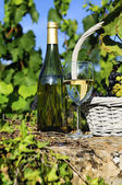Harvest and wine — Stock Photo
