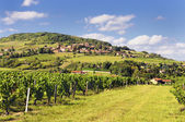 French village and vineyard — Stock Photo