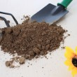 Many cultivate flowers tools with soil on desk. — Foto de Stock