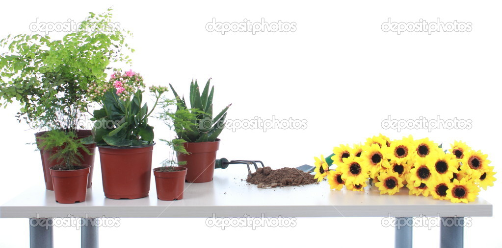 Many cultivate flowers tools with soil on desk. — Stock Photo #10099203