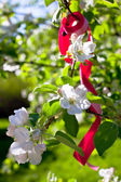 Blooming apple tree branches — Stock Photo