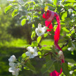 Red ribbon in blooming apple tree branches — Stock Photo