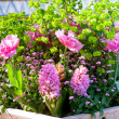 Pink flowerbed — Stock Photo #9950549