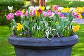 Bright flowerbed in Keukenhof — Stock Photo