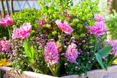 Pink flowerbed — Stock Photo