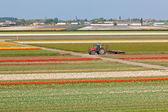 Veelkleurige tulpenvelden in nederland — Stockfoto