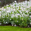 Flowerbed in Keukenhof — Stock Photo