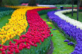 Bright flowerbed in Keukenhof — Foto de Stock