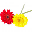 Royalty-Free Stock Photo: Red and yellow gerbera flowers