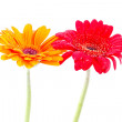 Red and orange gerbera flower — Stock Photo #10219221