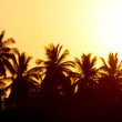 Tropical sunse — Stock Photo