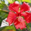 Red flowers — Stock Photo #9108622