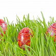 Egg easter in green grass — Stock Photo