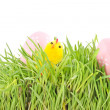 Egg easter in a grass on white - Stock Photo