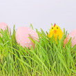 Egg easter in a grass on lila - Stock Photo