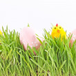 Egg easter in a grass — Stock Photo