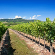 Tuscany vineyard — Stock Photo