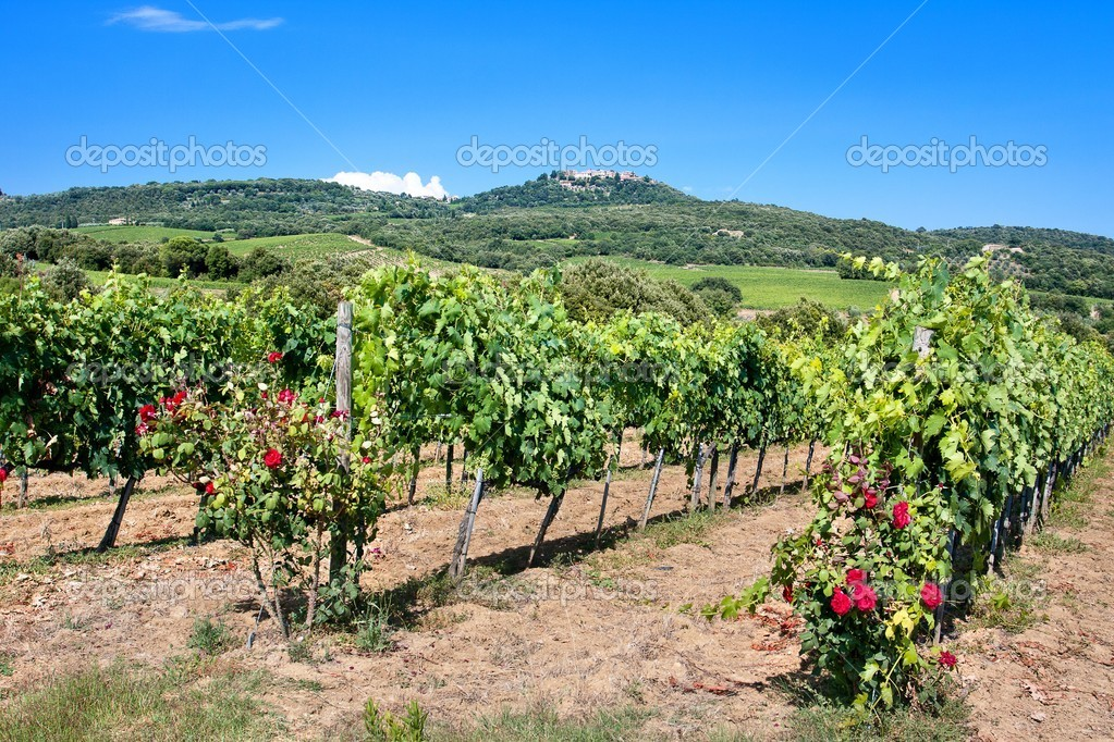Chianti vineyard landscape in Tuscany, Italy — Stock Photo #10283981