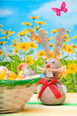 Bunny easter — Stock Photo