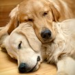 View of two dogs lying - Stockfoto