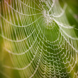 Beautiful detail of the cobwebs - Stockfoto