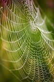 Beautiful detail of the cobwebs — Stock Photo