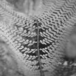 Stok fotoğraf: Black and white fine art leafs