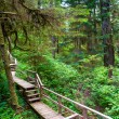 Forest trail on Vancouver island — Stock Photo #10645447