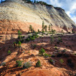 Sandstone cliff in Zion national park - Lizenzfreies Foto