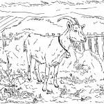 Ziege im Garten — Stockfoto