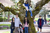 Family of seven by large cherry tree in full bloom — Stock Photo