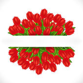 Red tulips. Gradient meshes. — Stock Vector