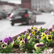City flowers. — Stock Photo