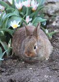 Baby konijn — Stockfoto
