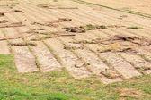 Farm growing new turf — Stock Photo