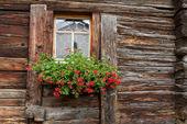 Fenêtre flétrie avec décoration géranium — Photo