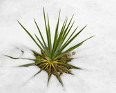 Palm plant in snow — Stock Photo