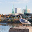 Seagull in front ofPortland convention center glass towers — Stock Photo