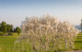 Skadedjur larver wrap hela bush — Stockfoto